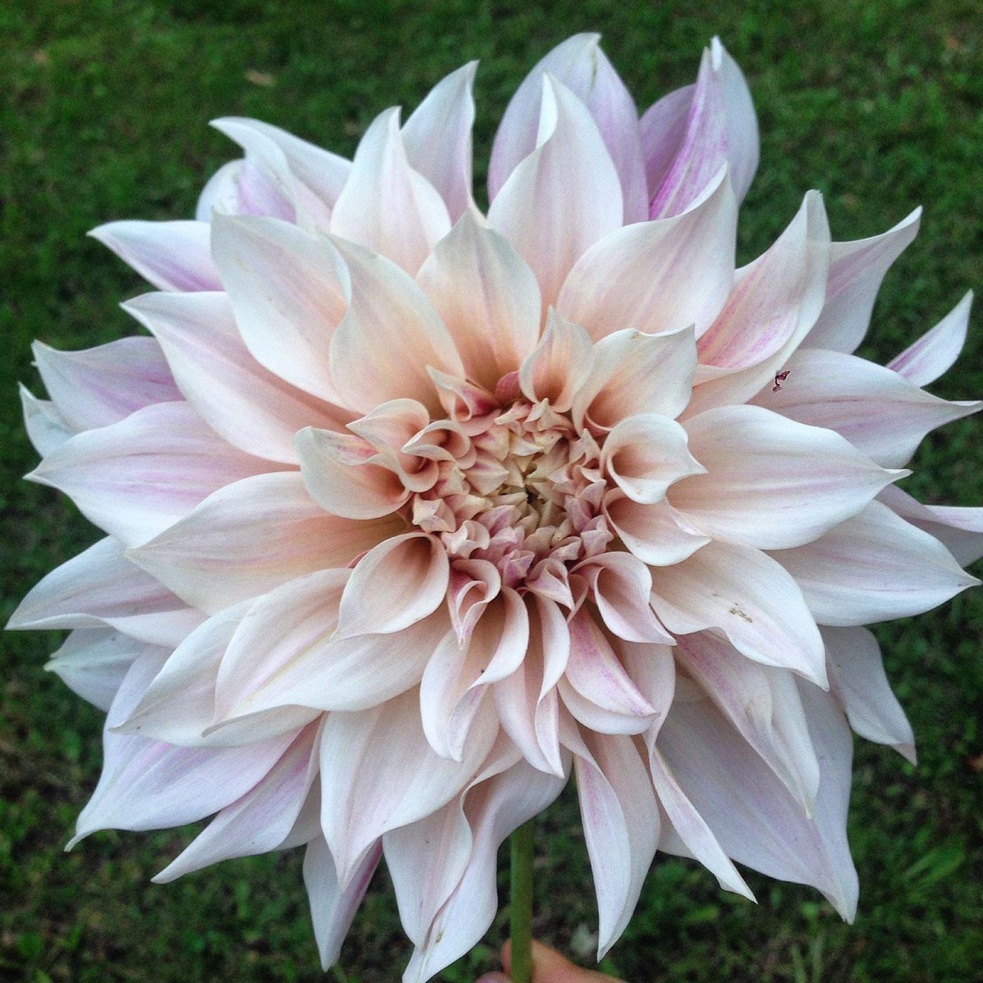 Coltivare Fiori Da Recidere olga's flower farm | workshop: dal giardino al vaso, coltiva