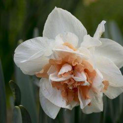 NarcissusMyStory