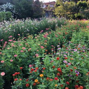 In flower farm